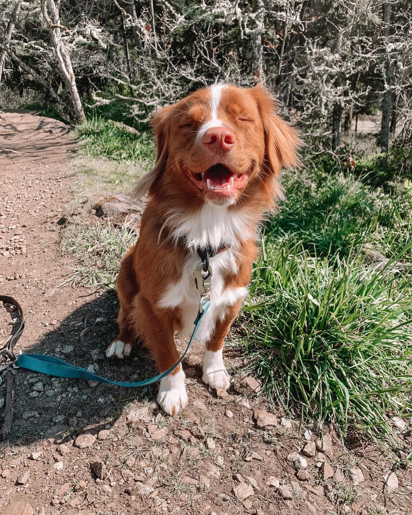 Vito - Dedras Dog Pack Member In Victoria