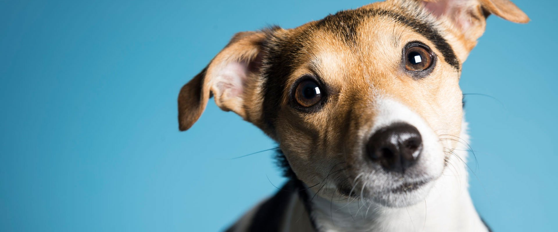Victoria Dog Walking Service - Dedras Dogs
